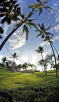 Maui-palms-thumb8144528