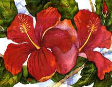 Hawaiian_hibscus_sm